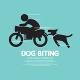 Dog Biting A Man On A Motorcycle Stock Photo