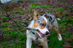 Dog biting a stick stock photo