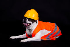Dog on black background chef building. construction site Stock Images