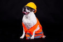 Dog on black background chef building security safety helmet Royalty Free Stock Photos