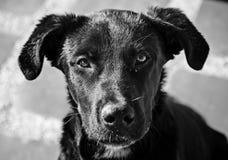 Dog, Black, Black And White, Dog Breed Stock Photo