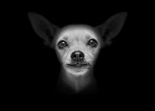 Dog  on black Stock Photo