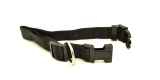 Dog Black collar Royalty Free Stock Photos