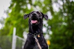 Dog, Black, Dog Breed, Dog Like Mammal royalty free stock photos
