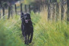 Dog, Black, Dog Like Mammal, Dog Breed Royalty Free Stock Photo