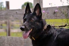 Dog 400 Royalty Free Stock Photo