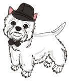 Dog in black hat and bow Stock Image