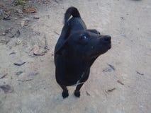 A dog. Black  my dog love lady smart stock photos