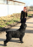 Dog - Black Russian Terrier Royalty Free Stock Images