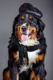 Dog in black scarf and beret Stock Photo