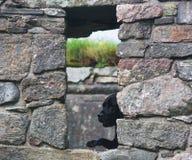 Dog. Black dog in stone house Stock Photo