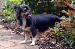 Dog 401 Stock Photos