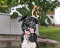 Dog black white color Royalty Free Stock Images