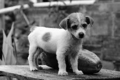 Dog, Black And White, Dog Like Mammal, Dog Breed Royalty Free Stock Photo