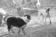 Dog, Black And White, Dog Like Mammal, Dog Breed Stock Photography