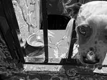 Dog. Black and white. Vector illustration. Beautiful animal Stock Image