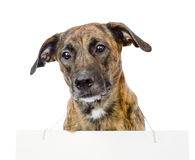 Dog with a blank banner hung on the neck. isolated Royalty Free Stock Images