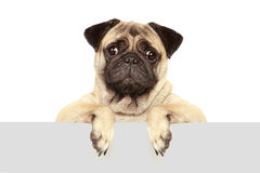 Dog with blank board Royalty Free Stock Image