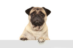 Dog with blank board Stock Photos