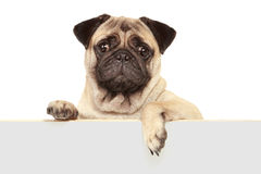 Dog with blank board Royalty Free Stock Photography