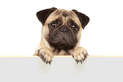 Dog with blank board Stock Image