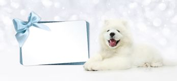 Dog with blank gift card isolated on blurred lights white. Background Royalty Free Stock Photography