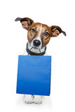 Dog blue bag Stock Photos