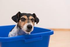 Dog in blue bath tub stock image