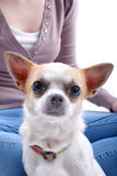 Dog with blurred woman in a background Stock Image