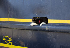 Dog on the boat Stock Photography