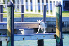 A dog is on the boat dock of a Luxury beach house Stock Image