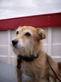 Dog on a boat Royalty Free Stock Image