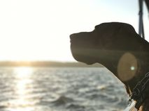 Dog on a boat Stock Image