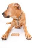 Dog and bone. Dog profile by bone treat Royalty Free Stock Image