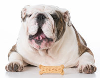 Dog and a bone Royalty Free Stock Image