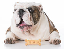 Dog and a bone Stock Photos