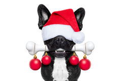 Dog with a bone for christmas. Christmas santa claus dog holding a big bone with mouth decoration xmas balls hanging, isolated on white background Stock Photography