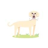 Dog and bone. Cute dog eat bone. Dog and bone. dog eat bone Royalty Free Stock Photos