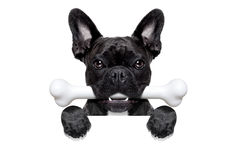 Dog with bone Stock Photography