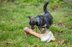 Dog and bone Stock Photo