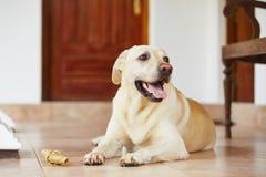 Dog with bone Stock Photos