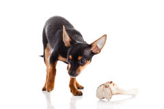 Dog and bone  on white background Royalty Free Stock Photography