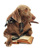 Dog and book Stock Images