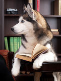 Dog with book Royalty Free Stock Photos