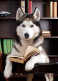 Dog with book. In library Royalty Free Stock Images
