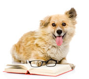 Dog with book looking at camera. isolated on white Royalty Free Stock Photography