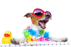 Dog booking online. Jack russell dog booking summer vacation holidays online using a pc computer keyboard, wearing sunglasses and a flower chain , isolated on stock photography
