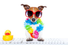 Dog booking online. Jack russell dog booking summer vacation holidays online using a pc computer keyboard, wearing sunglasses and a flower chain , isolated on stock images