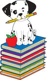 Dog on Books Stock Images