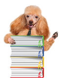 Dog with books Royalty Free Stock Photo